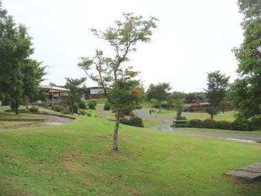 20128264